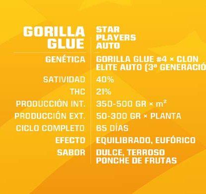 SensorySeeds Description Autoflowering Gorilla Glue Seeds