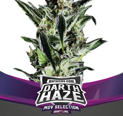 Darth Haze Weed Seeds