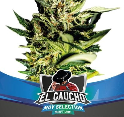El Gaucho THC Seeds Fast Flowering