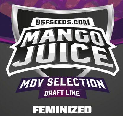 Mango Juice High Quality Weed Seeds