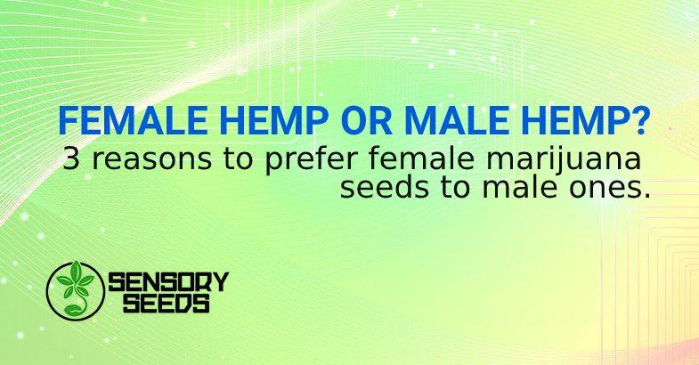 3 reasons to prefer female marijuana seeds