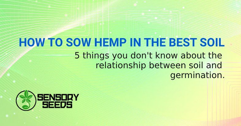 HOW TO SOW HEMP IN THE BEST SOIL