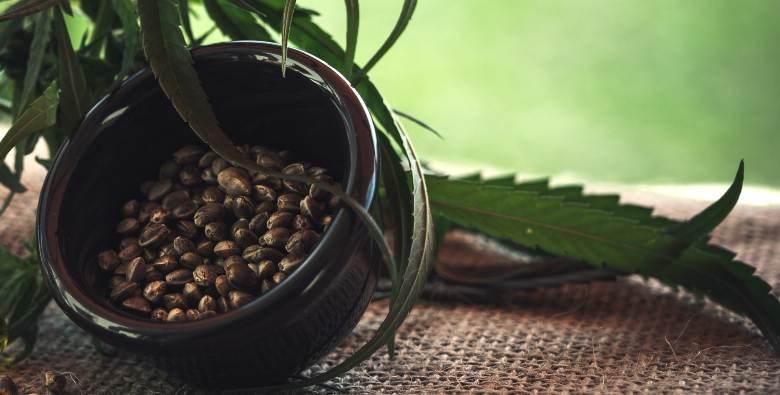 buy feminized seeds online